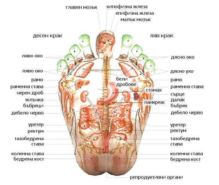 Въздействието върху рефлексната зона омекотява твърдото образувание, а мекотата се разпространява и встрани, което сочи, че енергията( сигналът) е изпратен по мередиана до свързания орган и му помага да бъде здрав.