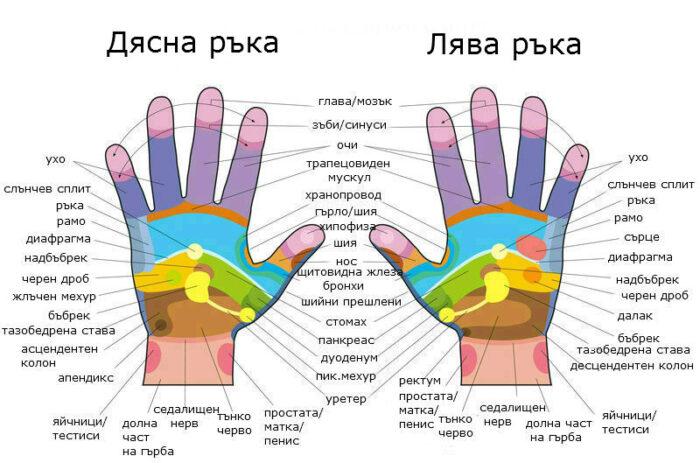 Схема на рефлексогенните зони върху дланите