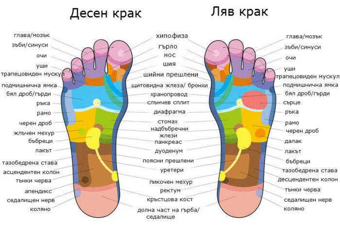 Схема на рефлексогенните зони върху ходило