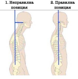 Позиция на главата спрямо тялото