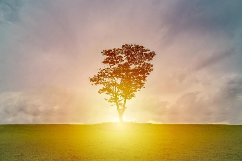 Инфрачервените лъчи имат благоприятен ефект върху здравето.