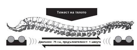 Масаж на гръбначния стълб Източник: BioMed Research International