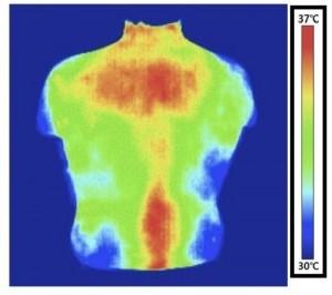 Термичен образ на гърба на субекта. Преди стимулация