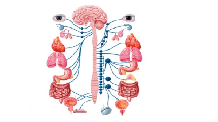 При развитие на плоскостъпие, комплекса от нарушения в стъпалото може да доведе и до нарушения в други жизненоважни органи и системи в човешкия организъм.
