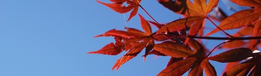 Есен е! Не е време за болести!