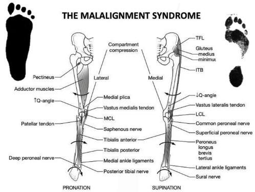 Илюстрация на мускула, засегнат от пронация и супинация.